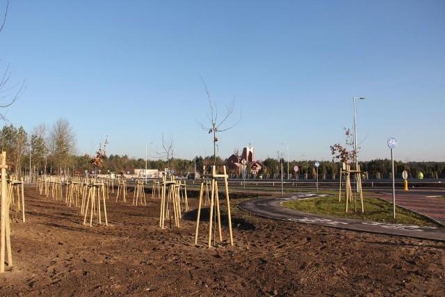 Ostrołęka. W mieście przybyło 380 nowych drzew, 14.12.2019