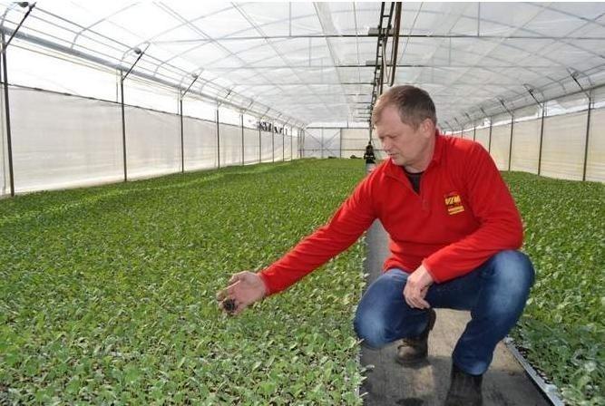 Zbigniew Lebiedzinski w jednym z siedmiu nowoczesnych tuneli, gdzie produkują rozsadę warzyw