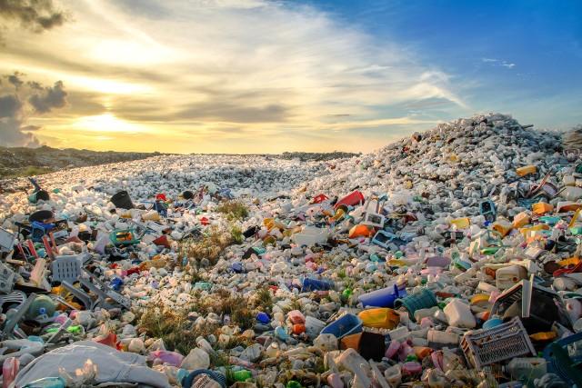 Z badań wynika, że polscy konsumenci są bardzo otwarci na ekologiczne rozwiązania.