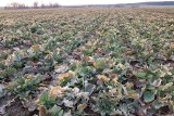 Aktywator glebowy - siła czterech składników