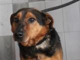 Nowy Targ. Psy ze schroniska w stolicy Podhala szukają nowego domu. Zobacz czworonogi do adopcji