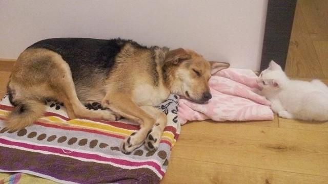 """Szczęśliwa Nuna odsypia """"przygodę"""""""