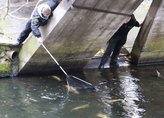 Przepływająca przez Darłowo rz. Wieprza to miejsce tarła troci. Podczas okresu godowego ryba staje się bardzo łatwym łupem dla kłusowników.