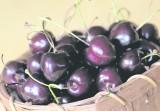Ten sezon jest wyjątkowo trudny dla producentów owoców