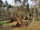 Nawałnica w lasach koło Bornego Sulinowa. Krajobraz po kataklizmie [zdjęcia]