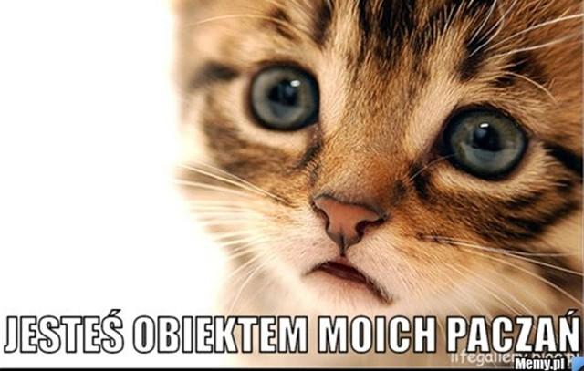 Memy z kotami robią zawrotną karierę w Polsce. Zobacz najlepsze.Zobacz kolejne memy z kotami. Przesuwaj zdjęcia w prawo - naciśnij strzałkę lub przycisk NASTĘPNE