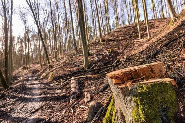 Wycinka drzew w Trójmiejskim Parku Krajobrazowym niepokoi mieszkańców