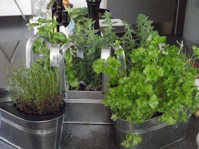 Herbata z dodatkiem świeżej mięty, domowe pesto z bazylii, a może po prostu natka pietruszki, która jak nic innego wzbogaca smak domowego rosołu? Zamiast za każdym razem wybierać się do sklepu po pęczek ulubionych ziół, których i tak nie zużyjesz w całości, zaprojektuj własny ziołowy ogródek w mieszkaniu.Wiosna to najlepsza pora na zasadzenie lub zasianie ulubionych ziół. Przyjęło się, że sadzimy je w doniczkach na parapecie, ale nie jest to jedyna możliwość. Jednak w każdym przypadku należy pamiętać, że najważniejsze jest to, by zapewnić roślinom dostęp do naturalnego światła.