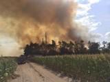 Września: Groźny pożar lasu w Sokołowie. Na miejscu było kilka jednostek strażackich [ZDJĘCIA]