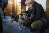 Nie żyje pies Baltic, uratowany z dryfującej kry [ARCHIWALNE ZDJĘCIA, WIDEO]