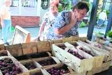 Kupują tony truskawek!