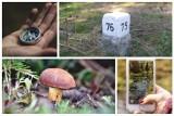 Idziesz na grzyby? Sprawdź, jak nie zgubić się w lesie. Między drzewami są punkty orientacyjne dla grzybiarzy. Oto leśne drogowskazy