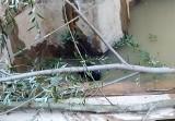 Lubcza. Dzięki strażakom udało się uratować rodzinę bobrów, które wpadły do głębokiego wykopu. Były wycieńczone i głodne [ZDJĘCIA] [6.10.]