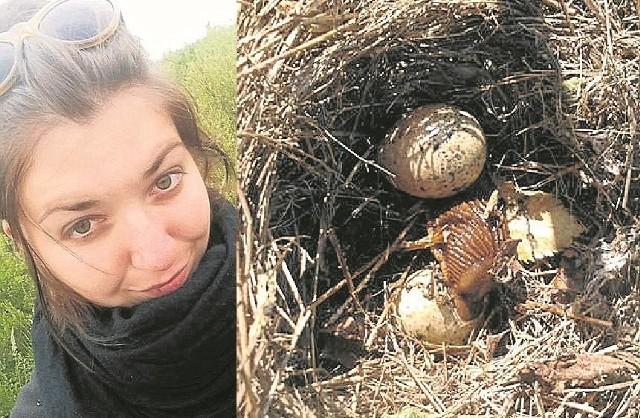 Justyna Chachulska, doktorantka z UZ zaobserwowała, że ślimaki zjadły pisklęta w gnieździe