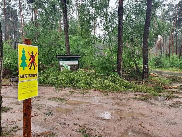 Ubiegłotygodniowa nawałnica spowodował ogromne zniszczenia w Nadleśnictwie Dobrzejewice. Leśnicy ze względów bezpieczeństwa wprowadzili zakaz wstępu do lasuPrzesuwaj zdjęcia w prawo - naciśnij strzałkę lub przycisk NASTĘPNE