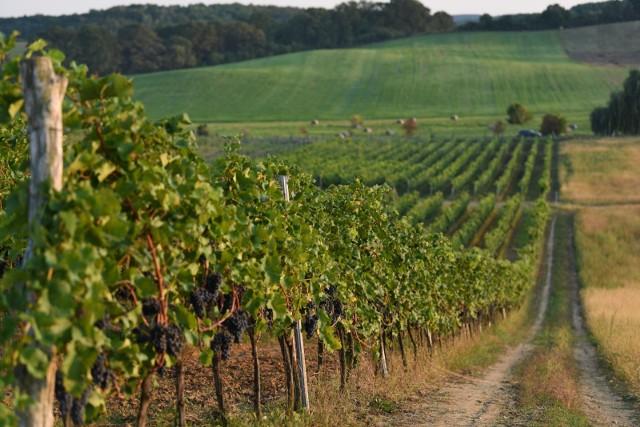 Winnica we wsi Łaz w gminie Zabór (województwo lubuskie)