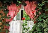 Stwórz swoją dżunglę z ulubionymi roślinami domowymi