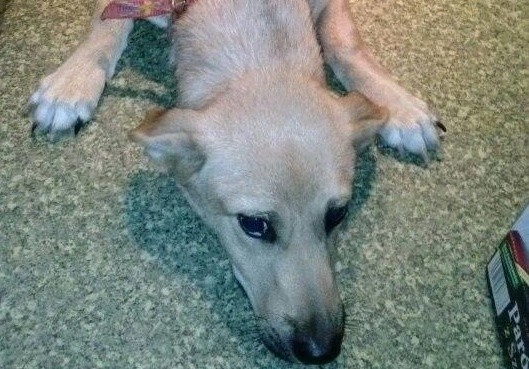 Nikt nie odpowie za tragedię psa uwięzionego w studni?Pies uratowany przez trenera Warty Poznań przeżył jeszcze tylko kilka dni. Zdechł w wyniku zatrucia organizmu