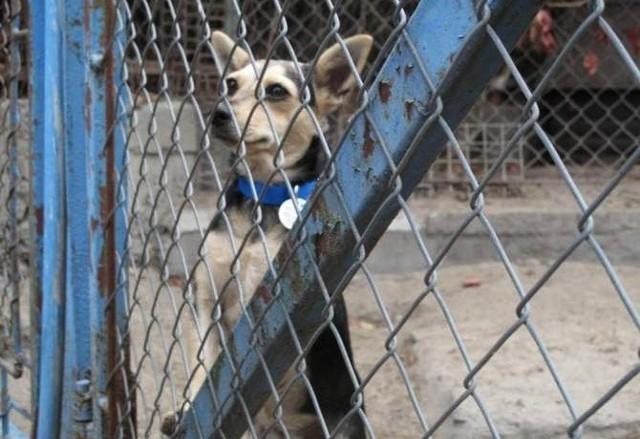 W ostatnim czasie to będzie kolejna zmiana na stanowisku kier. schroniska dla bezdomnych zwierząt w Orzechowcach