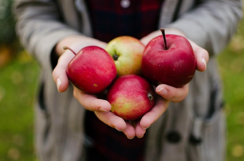 Jedno jabłko warto jadać każdego dnia.