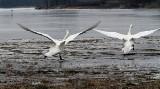 Ptasia grypa w Wągrowcu?