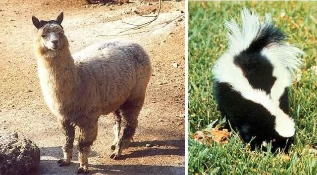 Takie zwierzęta trzymają w swoich domach Polacy.