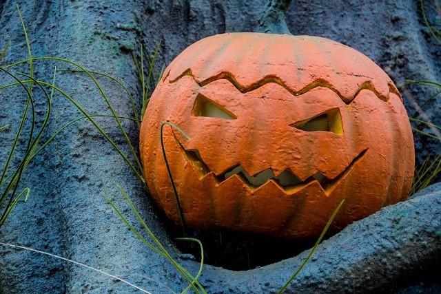 Dynia na Halloween: jak zrobić dynię na Halloween [dynia na Halloween wzory,dynia Halloween szablon]