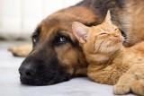 Pupil 2020 na Pomorzu. Najpiękniejsze zdjęcia psów i kotów naszych Czytelników