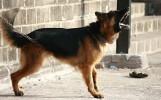 Tragedia w Dubinie. Pies pogryzł 6-latka. Stan chłopca jest bardzo ciężki