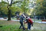 Dąbrowa Górnicza. Posadzą ponad 200 nowych drzew w całym mieście. W parku Zielona pojawi się 40 dębów