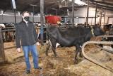 Droga pasza dla zwierząt zjada zysk  gospodarzy. Rolnicy chcieliby znowu stosować mączki mięsno-kostne w żywieniu krzyżowym