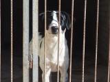 Wyłapywanie bezdomnych zwierząt w Hajnówce. Psy trafiają do schroniska, ale problem jest w ludziach [ZDJĘCIA]