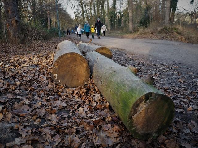Obumarłe drzewa pozostaną w parku Grabiszyńskim, wzbogacając ekosystem
