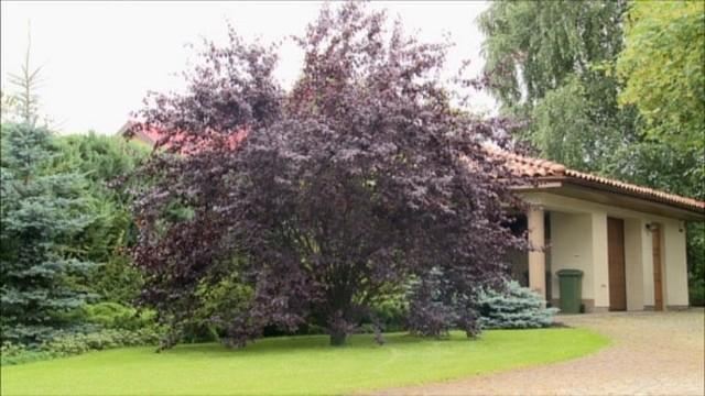 Rośliny, które upiększają nasz ogród jesienią (WIDEO)Rośliny, które upiększają nasz ogród jesienią (WIDEO)
