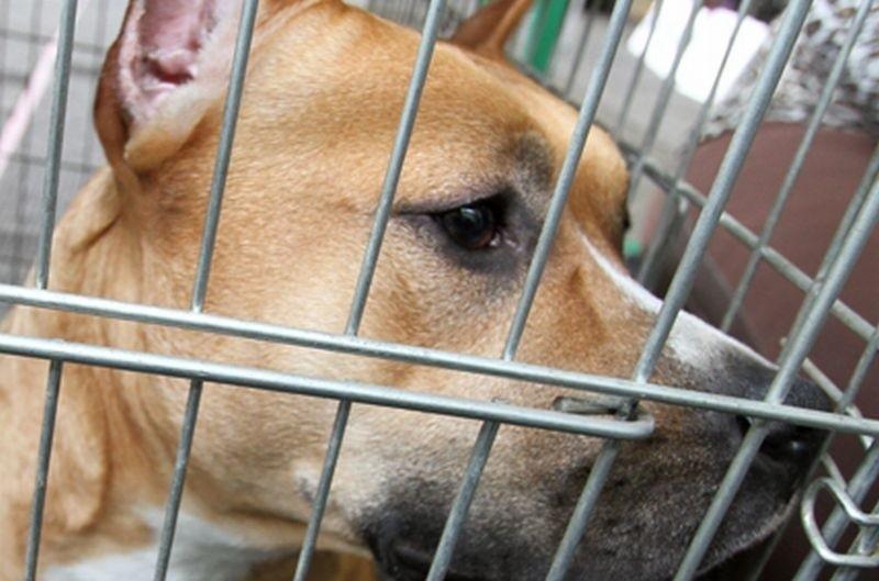 To kolejny wyrok skazujący ws. znęcania się nad zwierzętami.