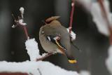 Czym i jak dokarmiać ptaki zimą? Popełniamy mnóstwo błędów