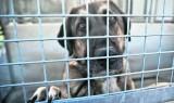 Piątka dla zwierząt. Ustawa o ochronie zwierząt dotyka właścicieli psów, zwierząt futerkowych i cyrkowych