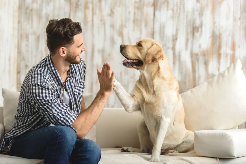 Oto najmądrzejsze rasy psów! Są najbardziej posłuszne i...