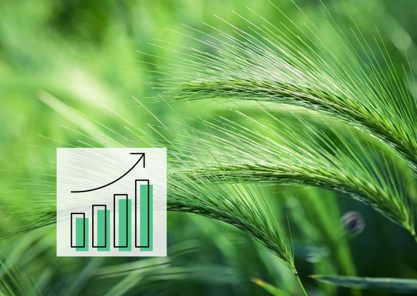 Według producenta ceny nawozów będą rosły z powodu...