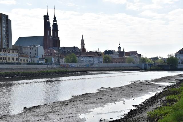 Niski poziom Odry w Opolu. Opadająca rzeka odsłania pozostałości po dawnej infrastrukturze oraz to, co ludzie do niej wrzucają. Nadbrzeżna roślinność cierpi z powodu braku wody.