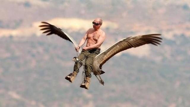 Europejski Dzień Ptaków. Zobacz najlepsze memy o ptakach. Śmieszne obrazki, zdjęcia i gify o ptakach