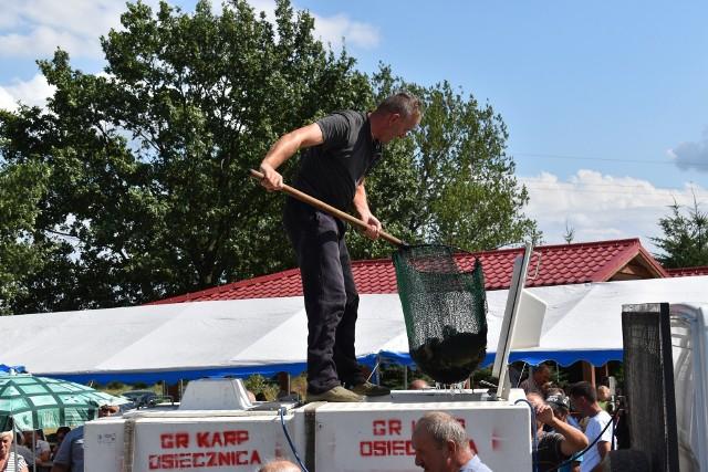 W sobotę, 11 sierpnia w Osiecznicy odbyła się jedenasta edycja Święta Karpia, jednego z większych lokalnych świąt w powiecie krośnieńskim. Kolejki po karpia w każdej postaci były potężne, jak zwykle. Zapraszamy od obejrzenia galerii zdjęć.Zobacz też wideo: Co sekundę 250 kilogramów plastiku trafia do oceanu