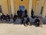 Czworonożni funkcjonariusze świętują Dzień Psa. Zobacz posiadaczy najlepszych nosów w Podlaskiem (zdjęcia)