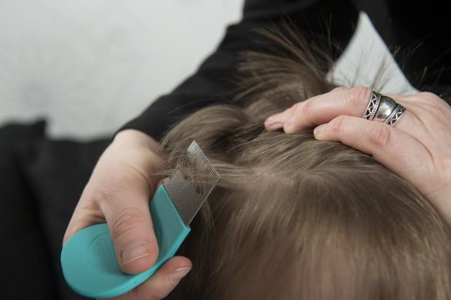 Wesz głowową (Pediculus humanus capitis) wywołuje pedikulozę, czyli chorobę pasożytniczą nazywaną powszechnie wszawicą. Jedną z metod sprawdzania, czy we włosach nie ma gnid (jaj wszy) oraz wszy, a także ich usuwania, jest czesanie włosów za pomocą specjalnego, gęstego grzebienia.