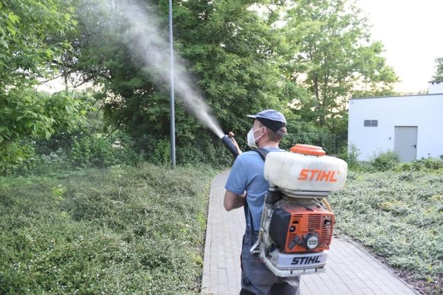 Opryski na meszki i komary rozpoczęły się w Toruniu 7 czerwca. Opryskanych zostanie w sumie 80 hektarów