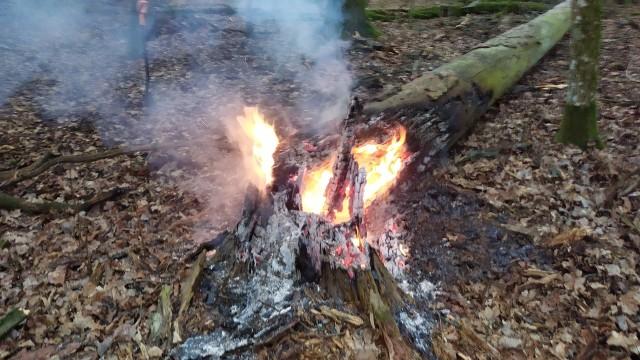 Leśnicy dwukrotnie gasili pożar. Przyczyna? Podpalenie suchych drzew