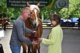 Piękne konie rasy sokólskiej na wybiegu w Szepietowie wzbudzały zachwyt i uznanie (Zdjęcia)