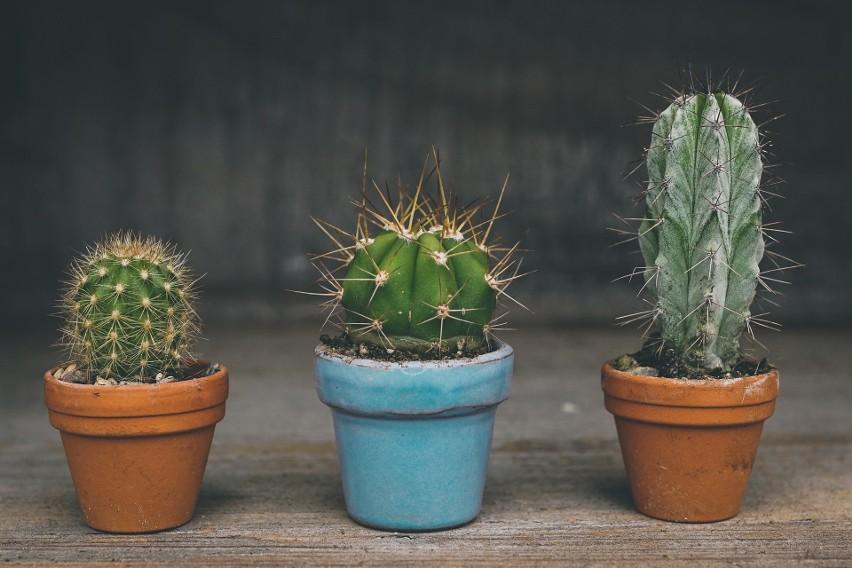 Plantswapp daje roślinom szansę na drugie życie. Zamiast wylądować na śmietniku mogą znaleźć nowego właściciela