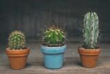 Nie radzisz sobie z uprawą kaktusa? Oddaj go komuś przez Plantswapp, nową aplikację do wymiany i sprzedaży roślin