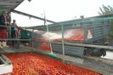Kto kupi włocławskie keczupy? Załoga straci pracę, a okoliczni rolnicy będą wozili pomidory do innych firm?